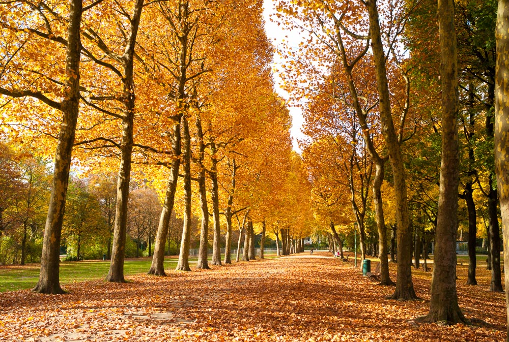 Autumn In Brussels 2011 Cgw Photography